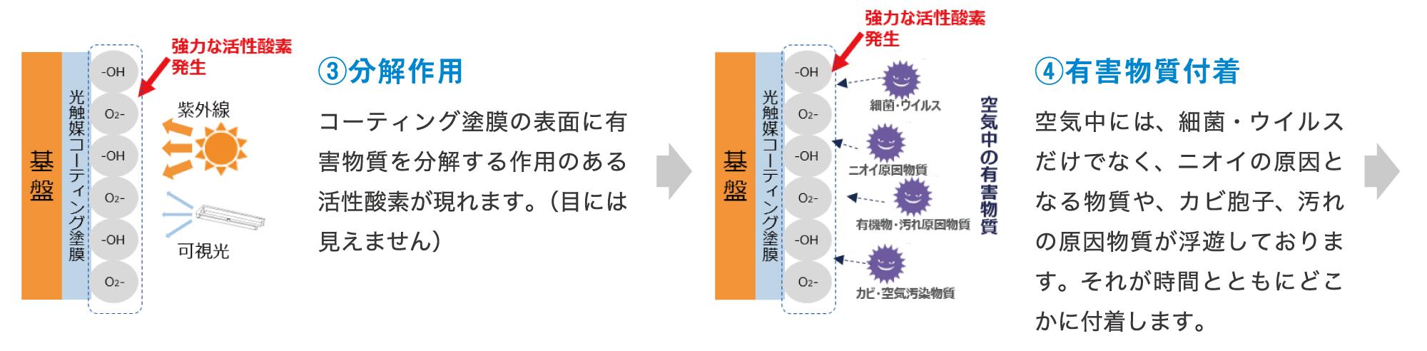 有害物質分解の仕組み2